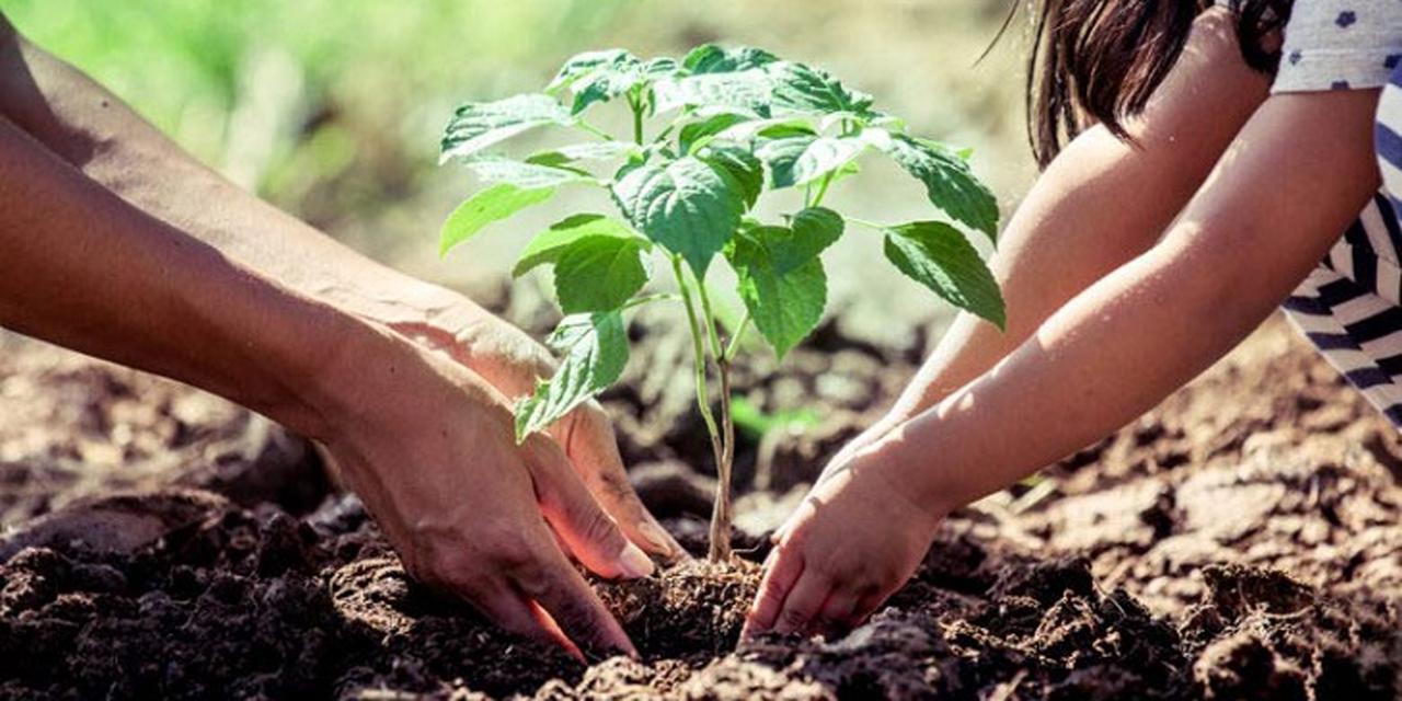 Entregarán 20 mil plantas para reforestar La Mixteca   El Imparcial de Oaxaca
