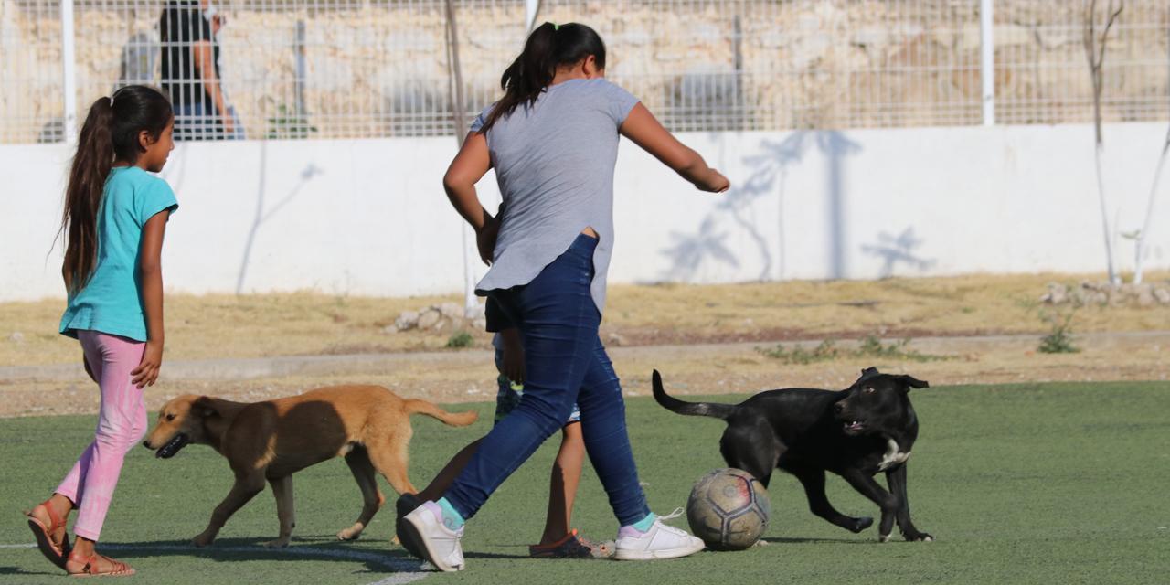 """Promueven actividad física en la """"nueva normalidad""""   El Imparcial de Oaxaca"""