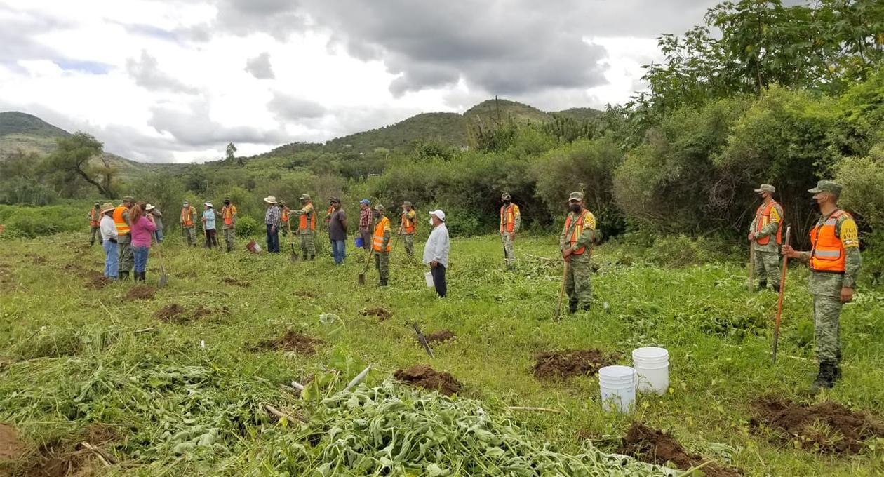 Ejército Mexicano reforesta Santa María Camotlán | El Imparcial de Oaxaca