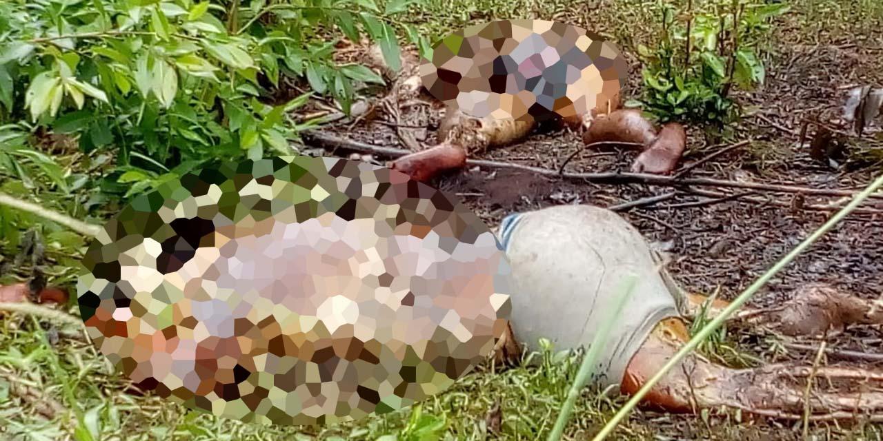 Encuentran dos cadáveres en descomposición en Loma Bonita   El Imparcial de Oaxaca
