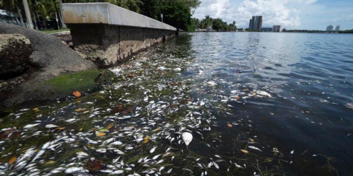 Aparecen muertos miles de peces en bahía de Miami | El Imparcial de Oaxaca