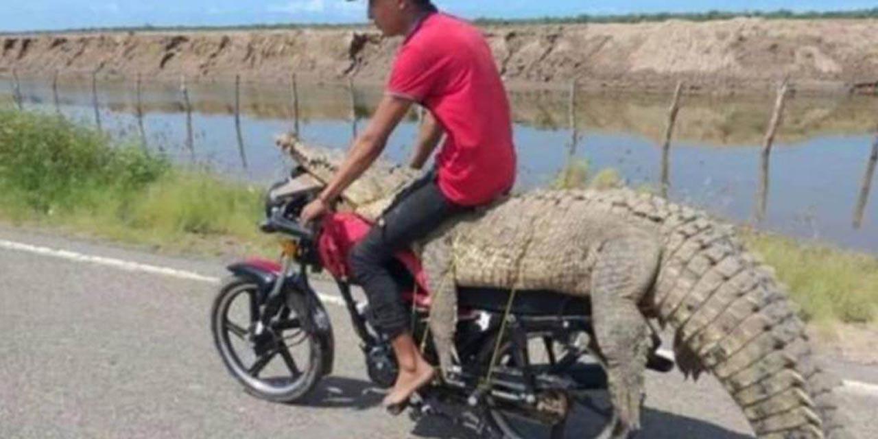 Video: Jóvenes atrapan un cocodrilo y lo trasladan en una moto | El Imparcial de Oaxaca