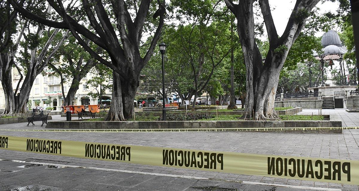 Ayuntamiento de Oaxaca, sin plan de manejo para arbolado