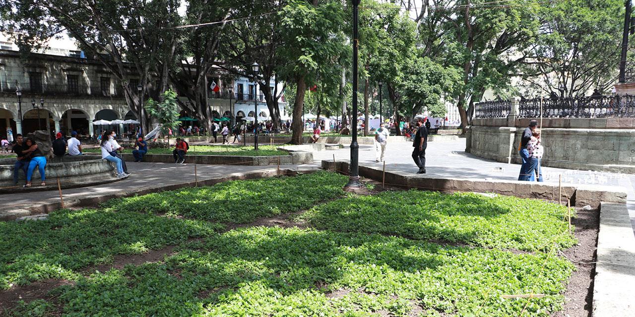 Llaman a rescatar las pocas áreas verdes de la capital oaxaqueña   El Imparcial de Oaxaca