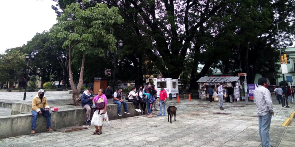 Tras caída de árboles, restringen acceso al zócalo capitalino