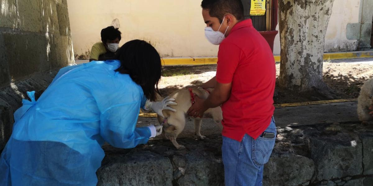 Continúa Jornada Nacional de Vacunación Canina y Felina | El Imparcial de Oaxaca