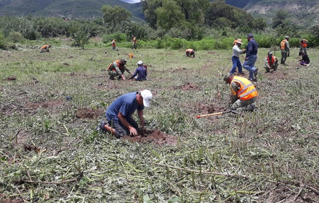 Termina periodo de reforestación en Santa María Camotlán | El Imparcial de Oaxaca