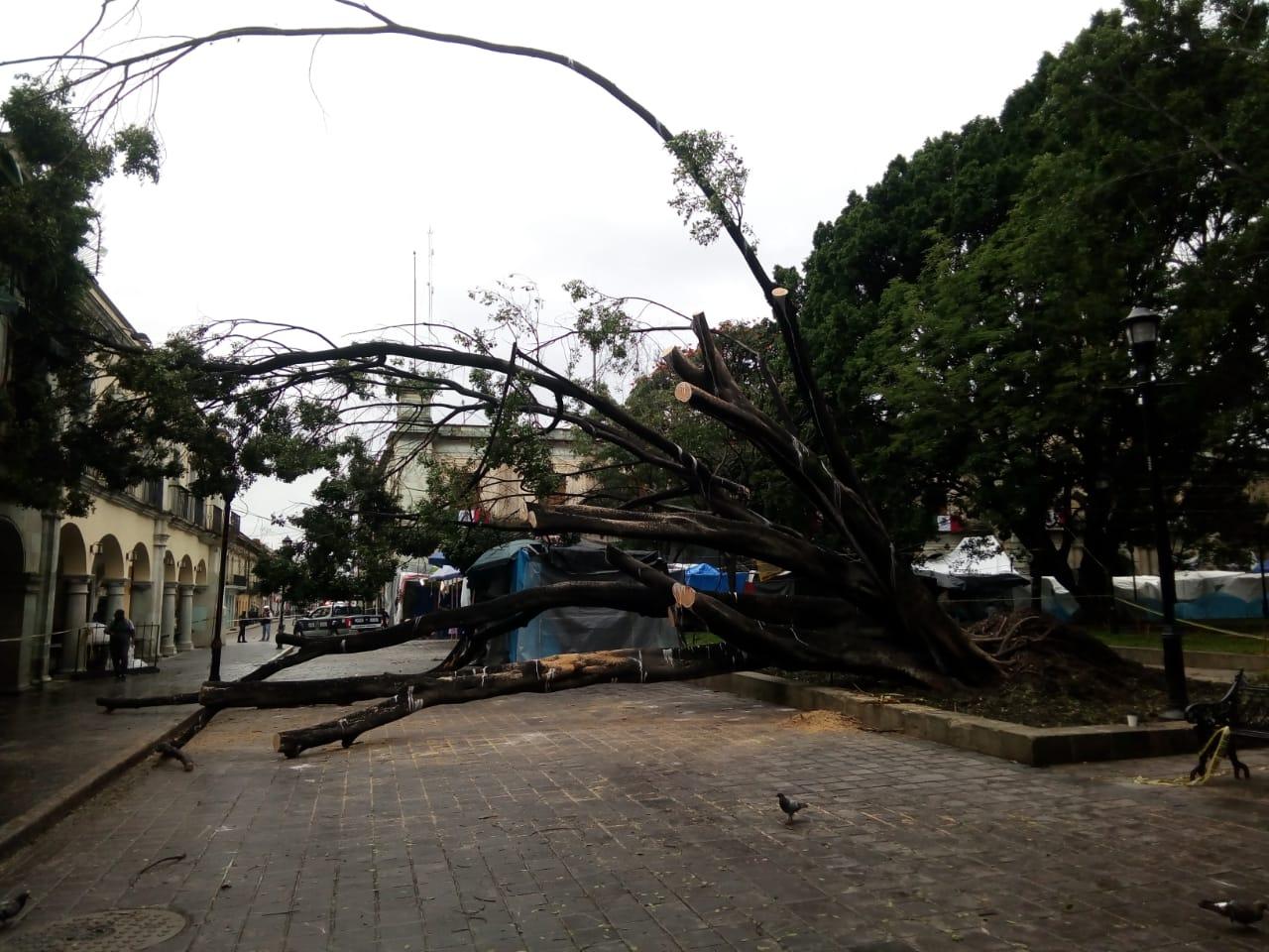 Piden evitar destrucción depocas áreas verdes de Oaxaca | El Imparcial de Oaxaca