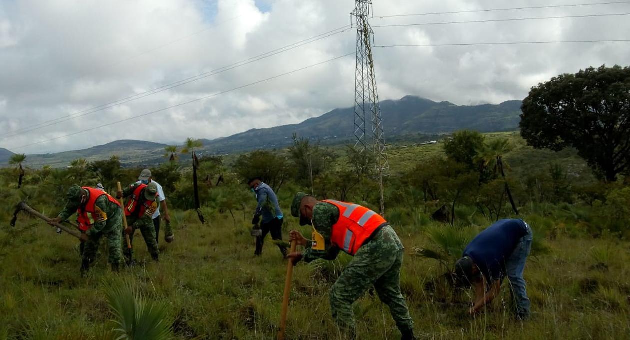 Finaliza reforestación en Zapotitlán Palmas, por elementos de la Sedena | El Imparcial de Oaxaca