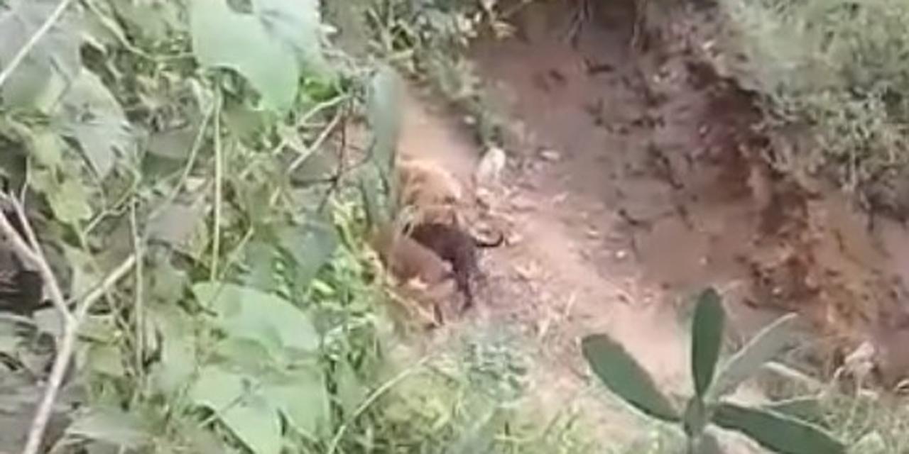 Video: Reportan masacre de mascota en San Agustín de las Juntas   El Imparcial de Oaxaca