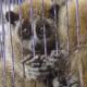 Refuerzan vigilancia para evitar tráfico de animales exóticos