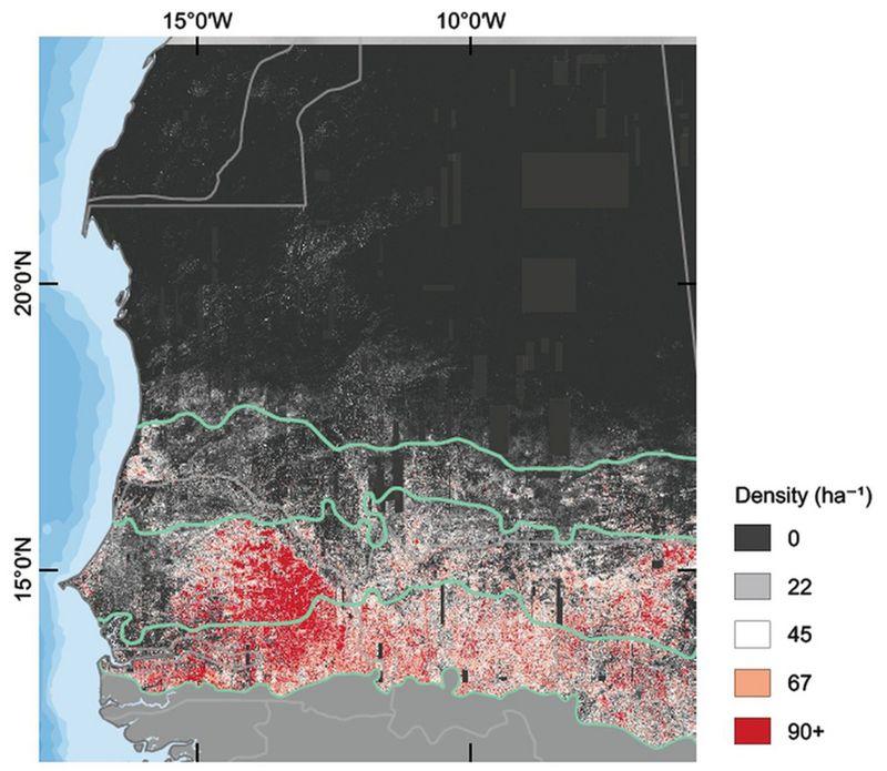 Hallan cientos de millones de árboles en el desierto del Sahara