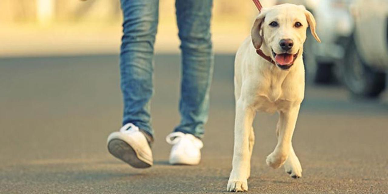 Realizarán caminata a favor de animales en Juchitán | El Imparcial de Oaxaca