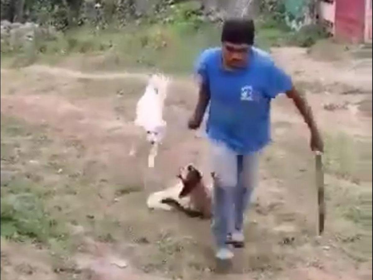Mata a perrita a machetazos en Ixtapaluca, Estado de México   El Imparcial de Oaxaca