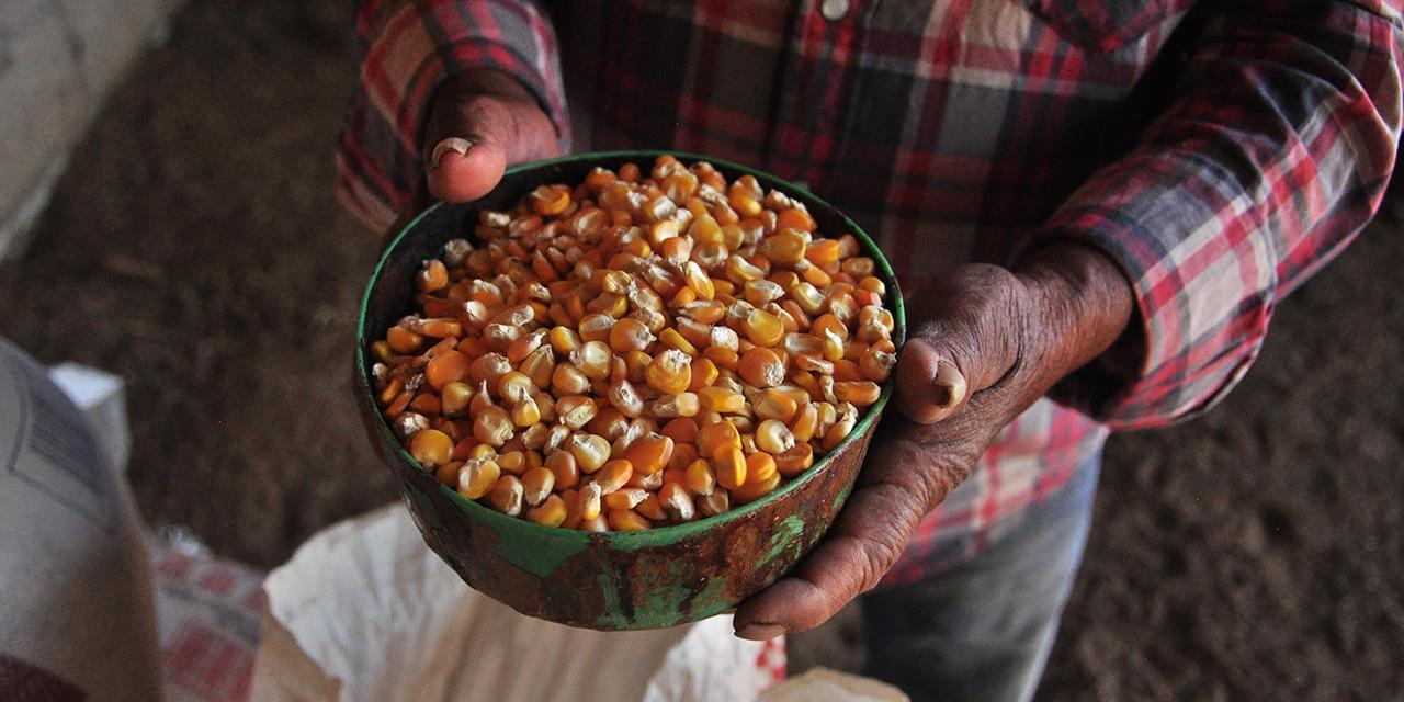 No necesitamos semillas transgénicas: Inifap   El Imparcial de Oaxaca