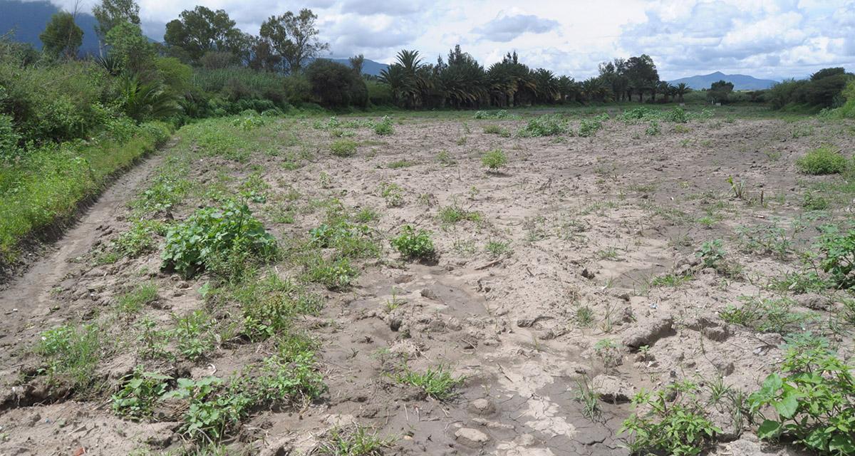 Ocultan Sedapa y Sader información  de daños al campo por lluvia y sequía | El Imparcial de Oaxaca