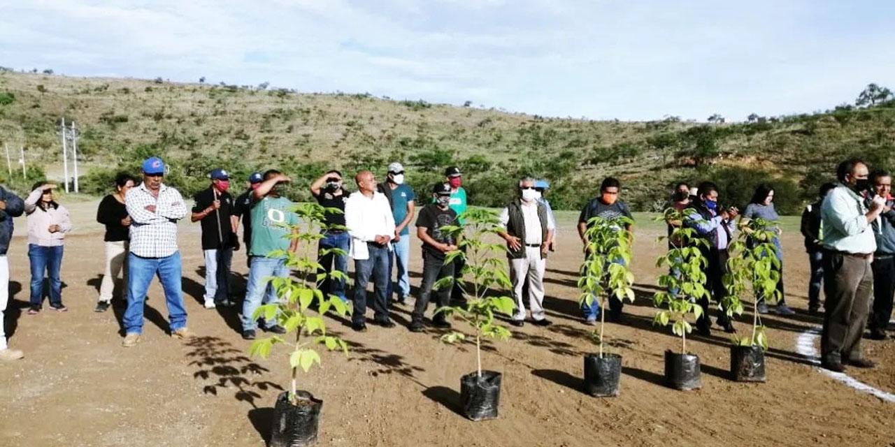 Apoyan reforestación con la plantación de 450 mil árboles en La Mixteca | El Imparcial de Oaxaca