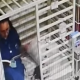 Video: Captan a veterinaria leyendo cuento a perrito enfermo