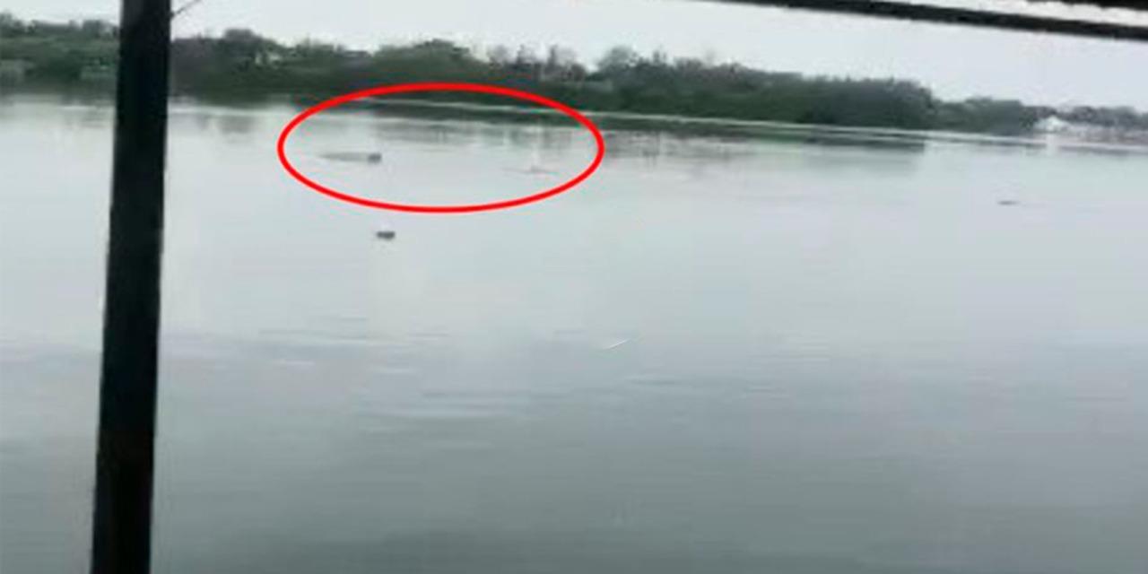 Video: Cocodrilo ataca y mata a hombre que nadaba en laguna de Tamaulipas | El Imparcial de Oaxaca