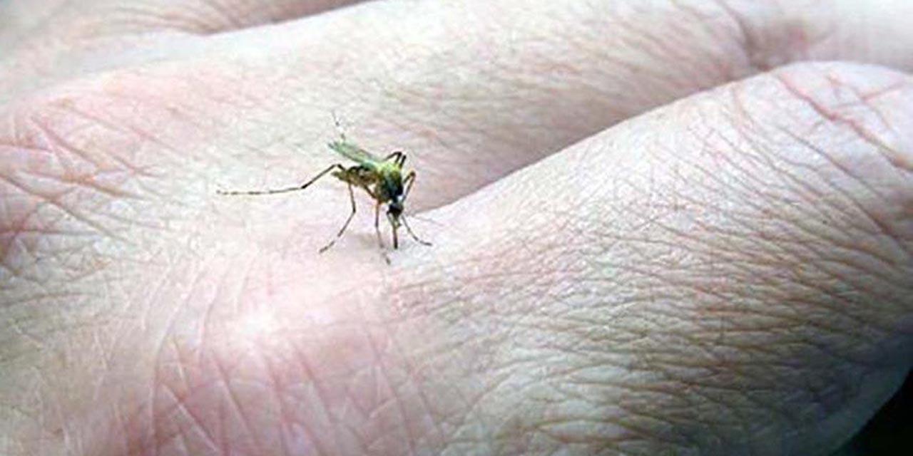 Reportan otra defunción por dengue en Oaxaca | El Imparcial de Oaxaca