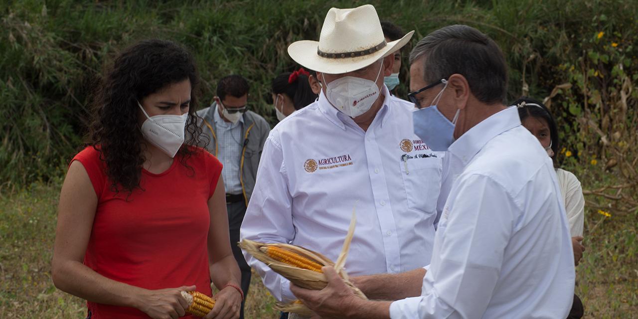 4T elimina seguros de protección decultivos para pequeños productores | El Imparcial de Oaxaca