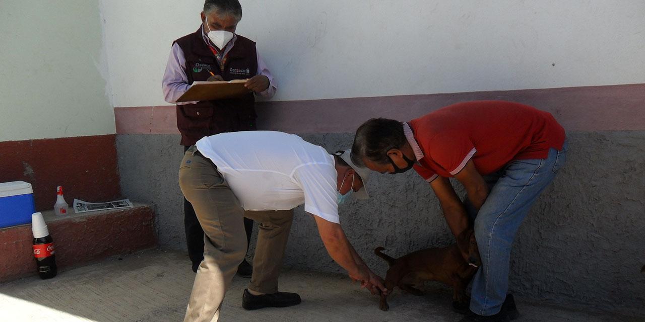 Cuicatlán concluye campaña de vacunación antirrábica | El Imparcial de Oaxaca