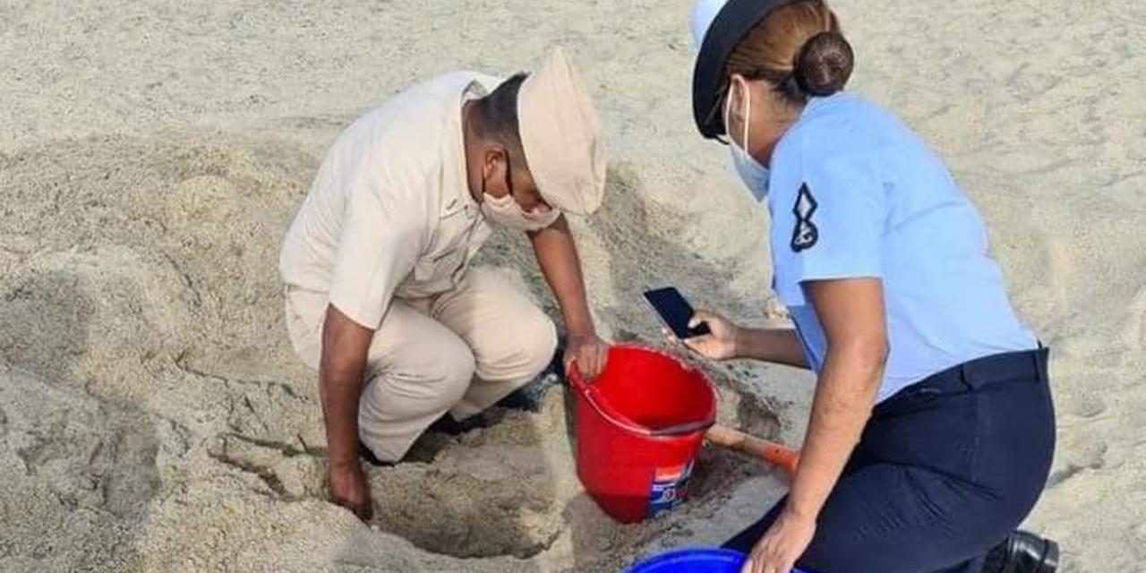 Recuperan huevos de tortuga en Salina Cruz