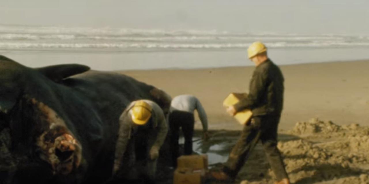 Video: Restauran video que muestra la explosión de una ballena varada | El Imparcial de Oaxaca