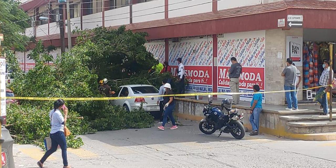 Cae árbol y daña vehículo en Juchitán | El Imparcial de Oaxaca
