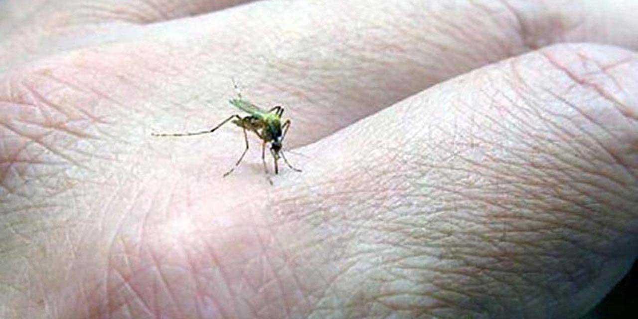 Suman otros 5 casos de dengue en Oaxaca   El Imparcial de Oaxaca