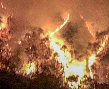 Fuego siniestra más de 18 mil hectáreas en Oaxaca