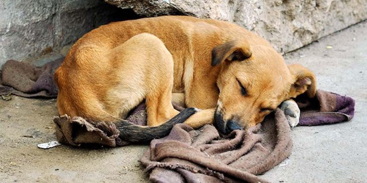 Video: Mueren 17 perros tras ser envenenados con comida | El Imparcial de Oaxaca