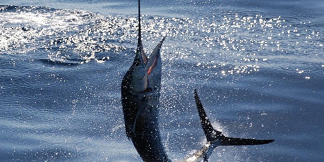 Van de Oaxaca al Panamericano de Pesca | El Imparcial de Oaxaca
