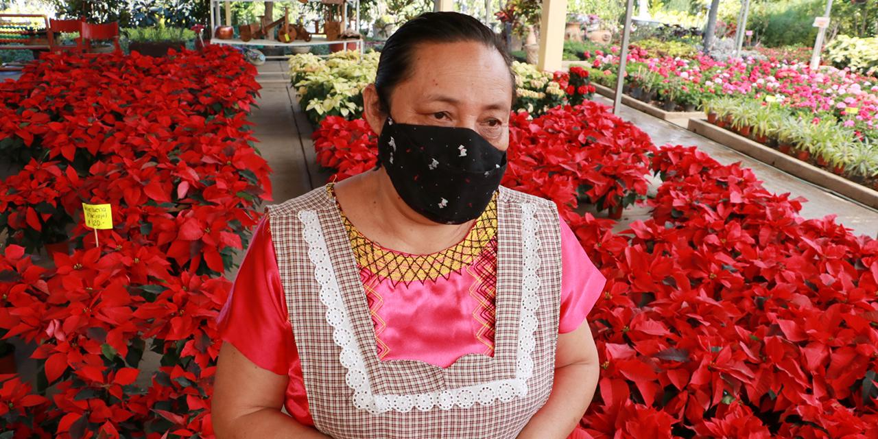 """""""Marchita"""" pandemia a la flor de nochebuena en Oaxaca"""