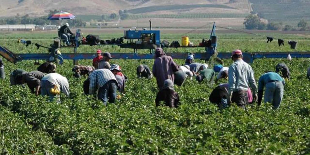 Discriminan a trabajadores mixtecos en Sinaloa | El Imparcial de Oaxaca