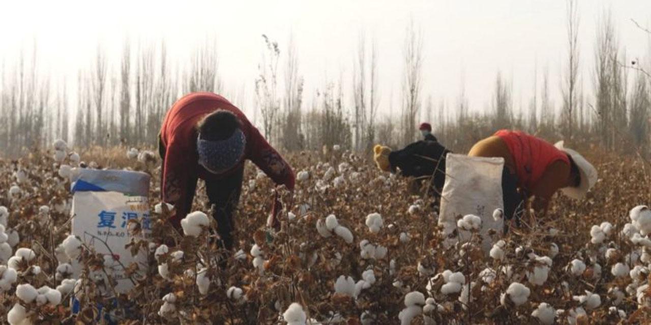 El algodón de China: la delgada línea entre la industria global de la moda y el trabajo masivo | El Imparcial de Oaxaca