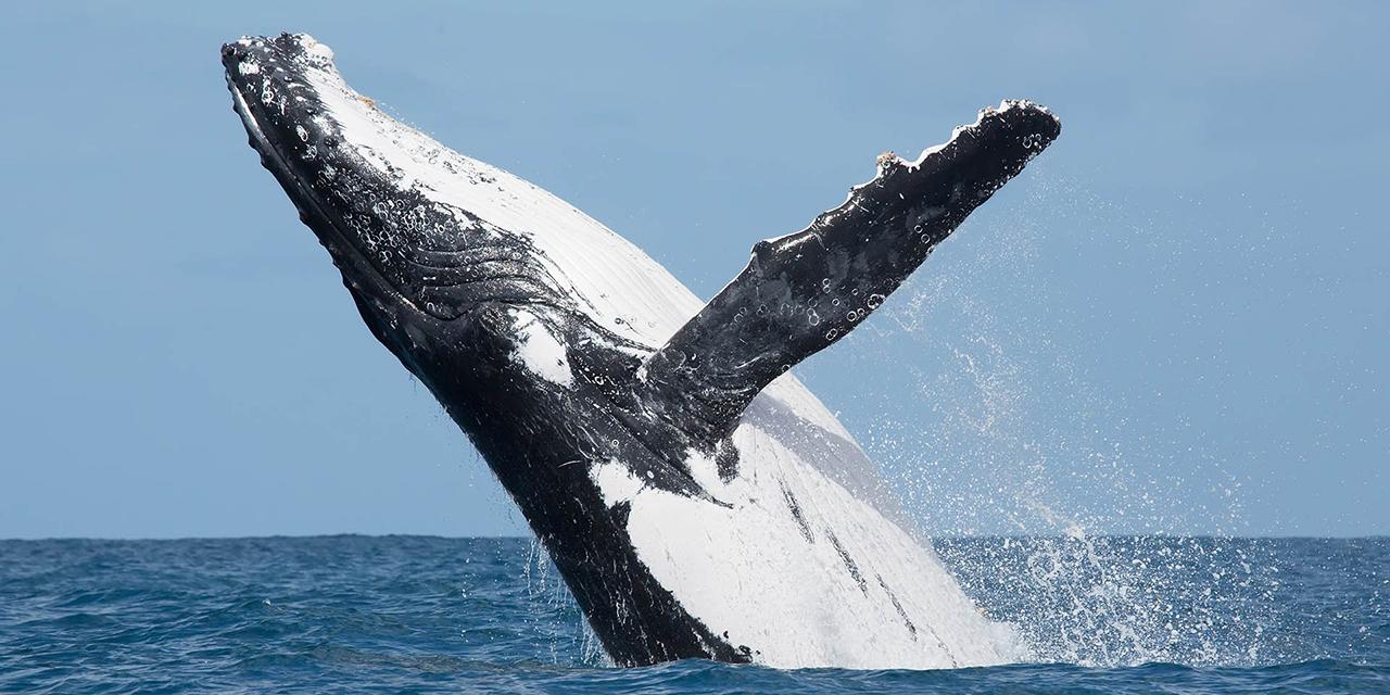 Llega la temporada de ballenas | El Imparcial de Oaxaca