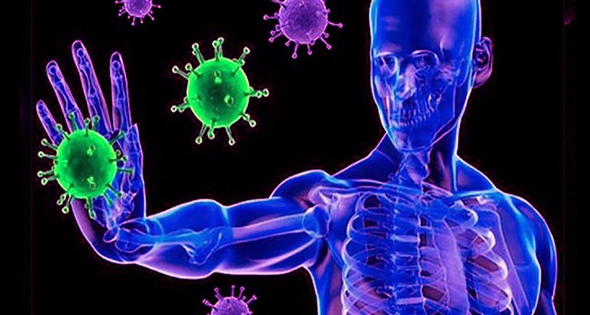 Hechos que probablemente no sabías acerca de tu sistema inmune   El Imparcial de Oaxaca