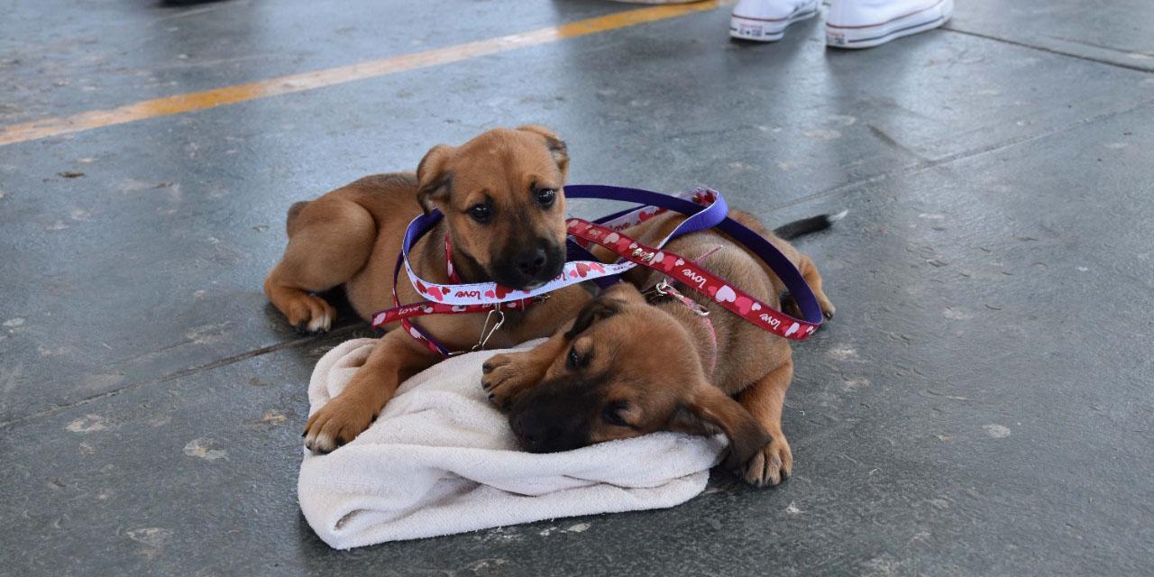 Esterilizan a perros y gatos en Pochutla | El Imparcial de Oaxaca