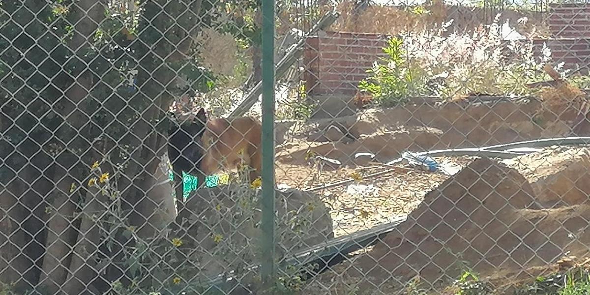 Denuncian maltrato animal en Cuilápam   El Imparcial de Oaxaca