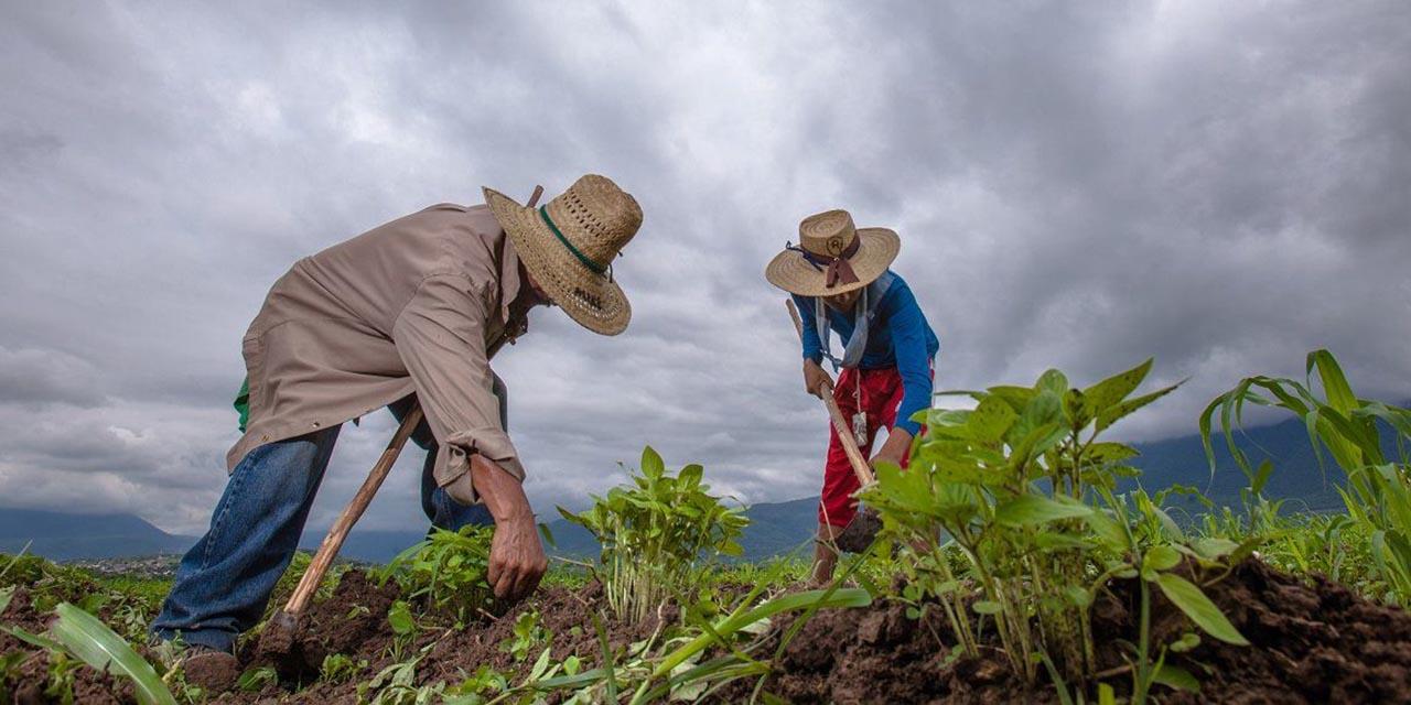 Abandonan a campesinos de Oaxaca   El Imparcial de Oaxaca