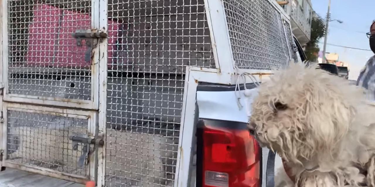 Video: Rescatan a dos perros abandonados en azotea | El Imparcial de Oaxaca