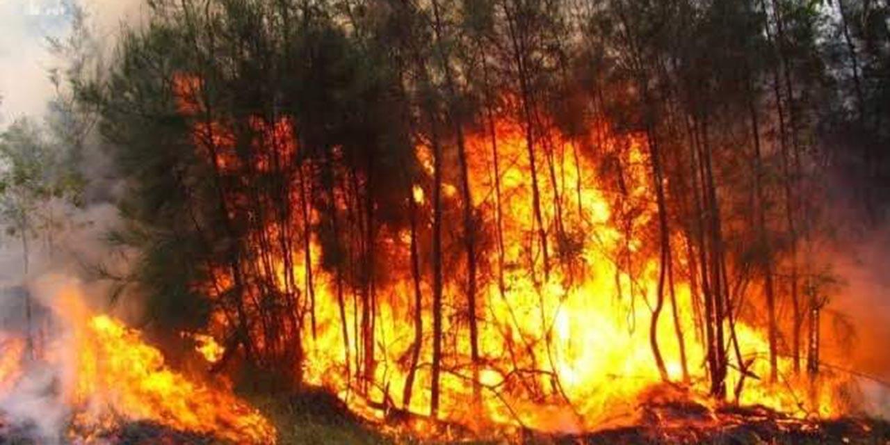 Incendios forestales se descontrolan y devoran bosques de Oaxaca | El Imparcial de Oaxaca
