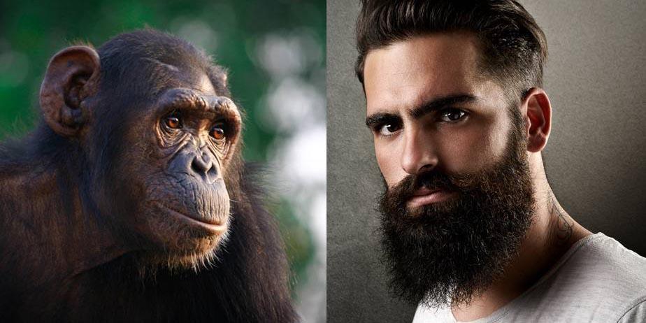 Revelan la diferencia entre el cerebro de los humanos y chimpancés | El Imparcial de Oaxaca