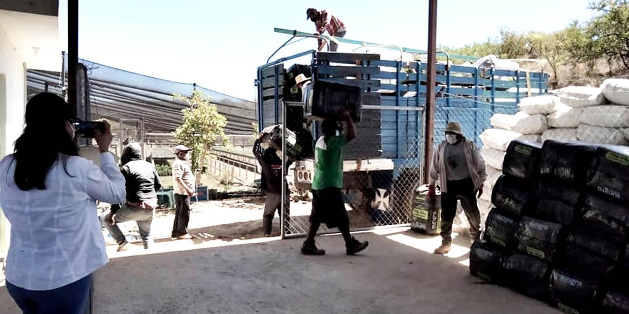 Preparan reforestación masiva en la Mixteca; la meta es de 500 mil plantas   El Imparcial de Oaxaca
