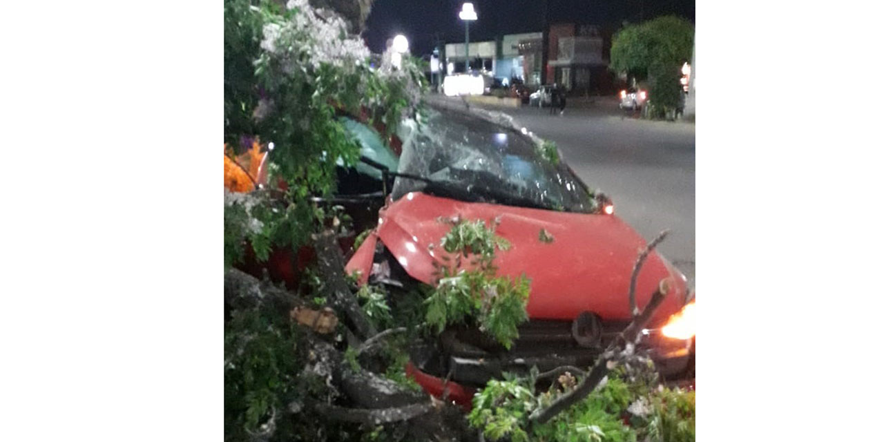 Automovilista se impacta contra árbol y lo tumba en avenida Universidad, Oaxaca