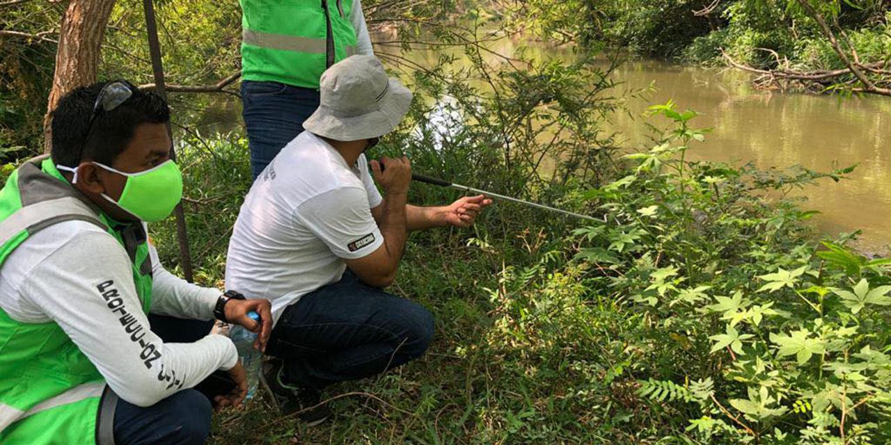 Continúa búsqueda de ejemplares de cocodrilos en el Río Espíritu Santo | El Imparcial de Oaxaca
