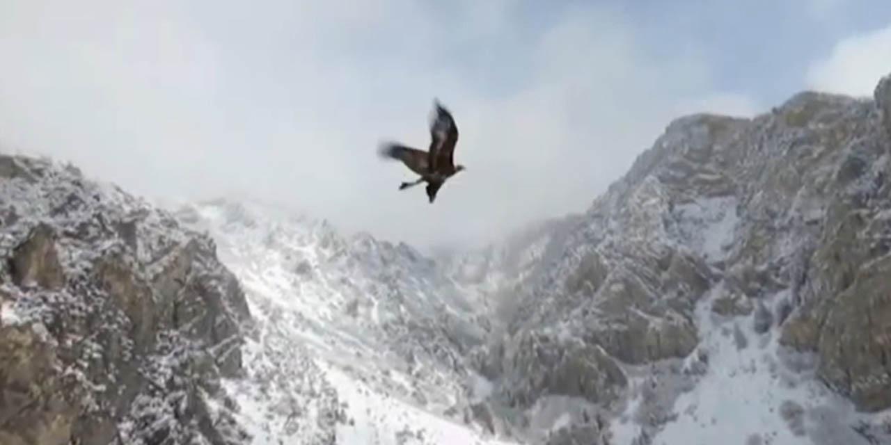 Majestuosa águila se une al vuelo de un dron | El Imparcial de Oaxaca
