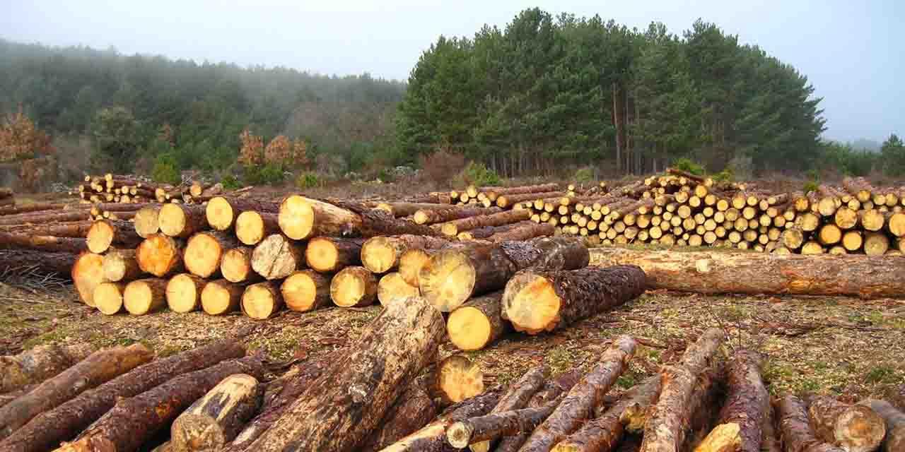 México en el Top Ten de países con mayor deforestación   El Imparcial de Oaxaca