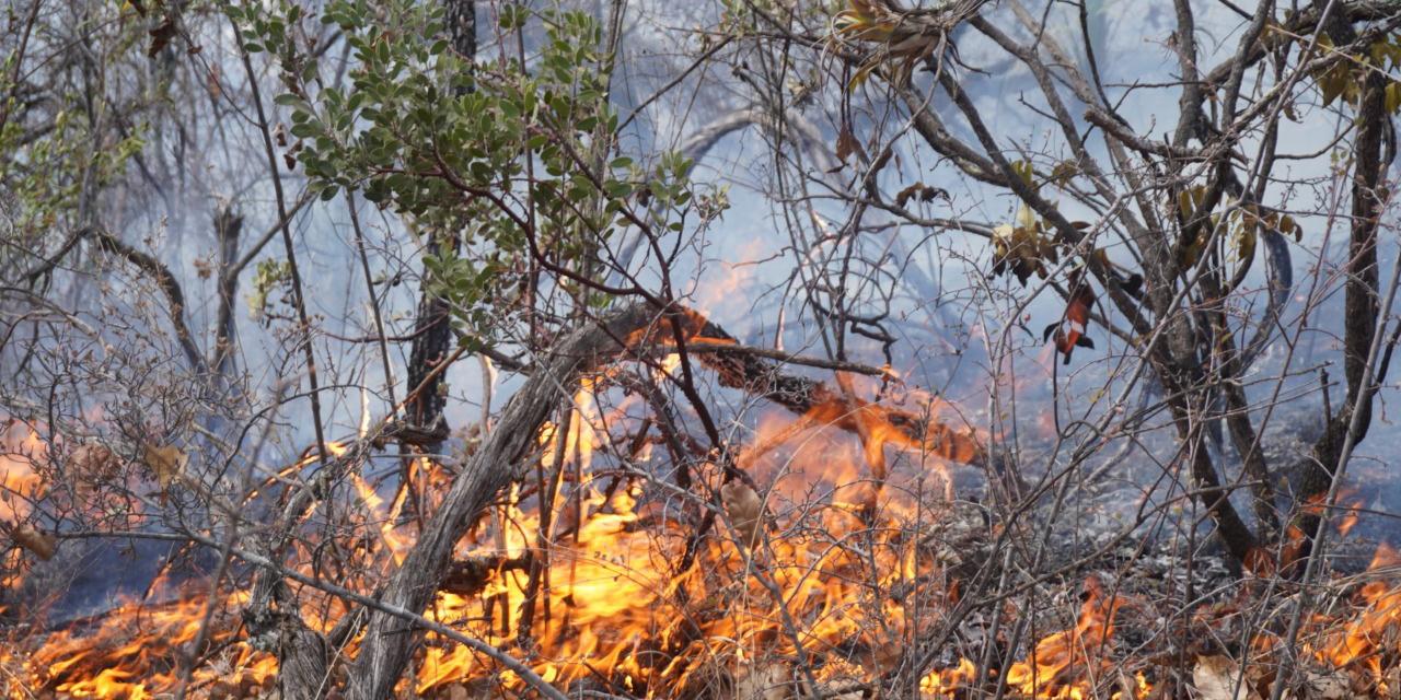 La Mixteca es devasta por incendios forestales   El Imparcial de Oaxaca